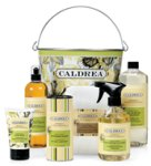 Caldrea Ginger Pomelo gift set