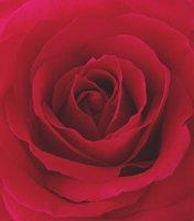 Sonoma Scent Studio Velvet Rose perfume