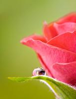 Ava Luxe Rosa De La Luz fragrance