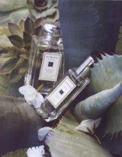 Jo Malone Blue Agava & Cacao fragrance