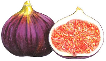 Two Figs by Ann Swan