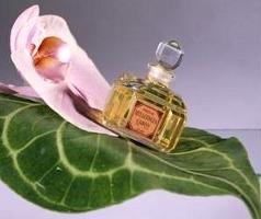 Bellodgia perfume by Caron