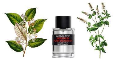 Styrax, Geranium Pour Monsieur, Mint