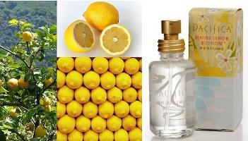 lemons/Pacifica Malibu Lemon Blossom