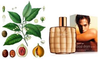 Estee Lauder Brasil Dream for Him fragrance