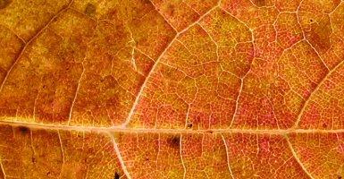 nzl-leaf
