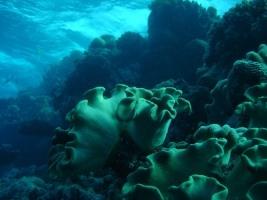 Underwater flowers