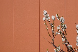 White flowers on color wall