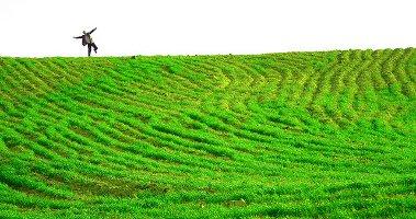Green field, man