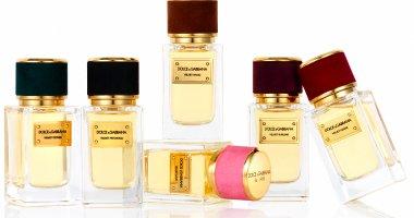 Dolce & Gabbana Velvet Collection
