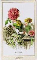 Flower Choices card, Dahlia