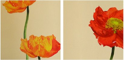 poppies, 2 ways