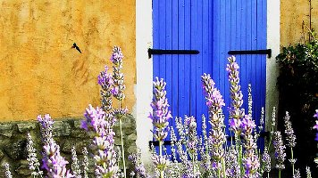 Blue and purple (provence)