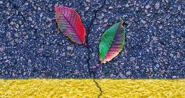 every-leaf
