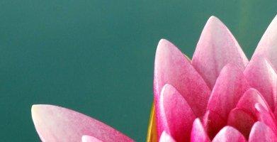 Flower on green
