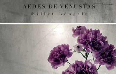 Aedes de Venustas Oeillet Bengale, brand image