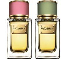 Dolce & Gabbana Velvet Rose & Velvet Bergamot