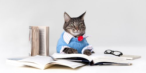 Max the Brown Tabby Cat with Books