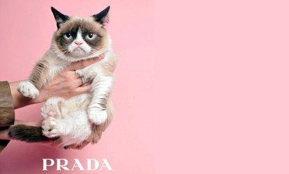 Prada grumpy cat