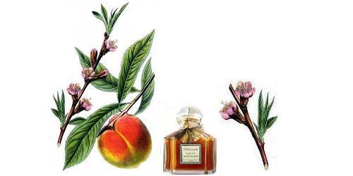 Guerlain Vague Souvenir + peach blossoms