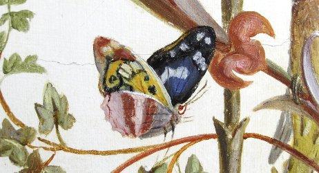 butterfly from Brumidi fresco
