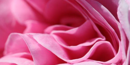 layers of pink petals