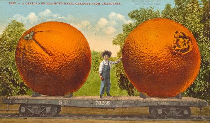 Vintage postcard: navel oranges