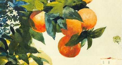 homer-oranges