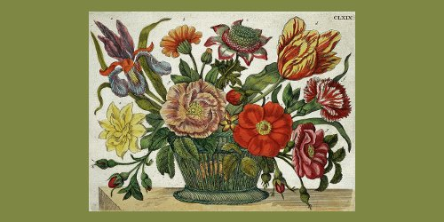 The New Book of Flowers, illustration