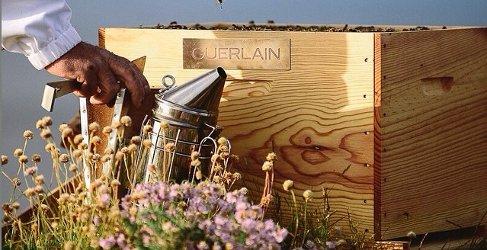 Guerlain bees