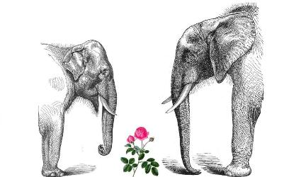 elephants and rose