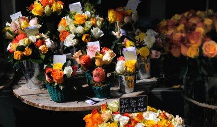 Spring flowers of Montmartre