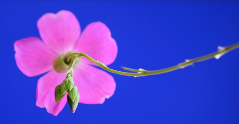 pink-blue-s