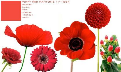 Pantone Poppy Red