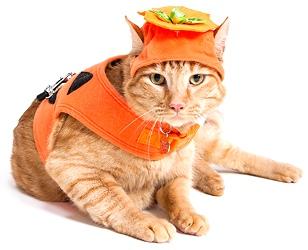 Orange Cat in Pumpkin Costume