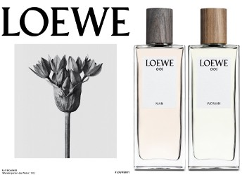 Loewe 001 brand image