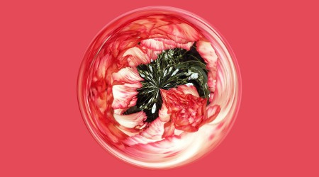 carnation swirl