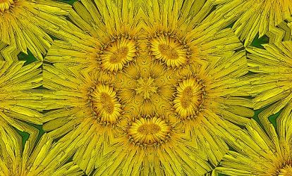 dandelion pattern