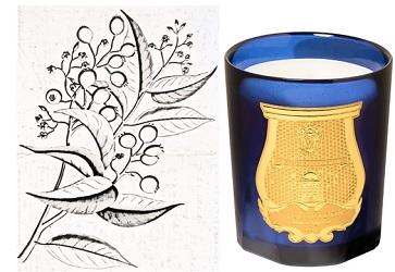 Cire Trudon Tadine candle
